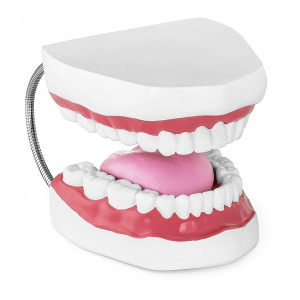 Modello anatomico denti - Dentatura